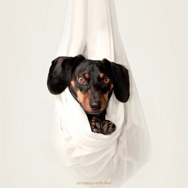 so-happy-with-less-imagem-minimalismo-e-animais-de-estimacao