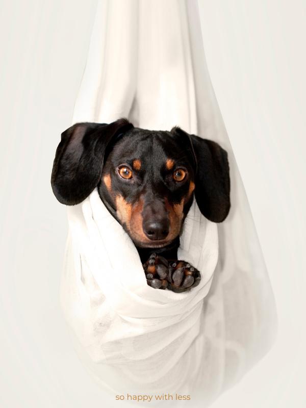 Minimalismo e Animais de estimação
